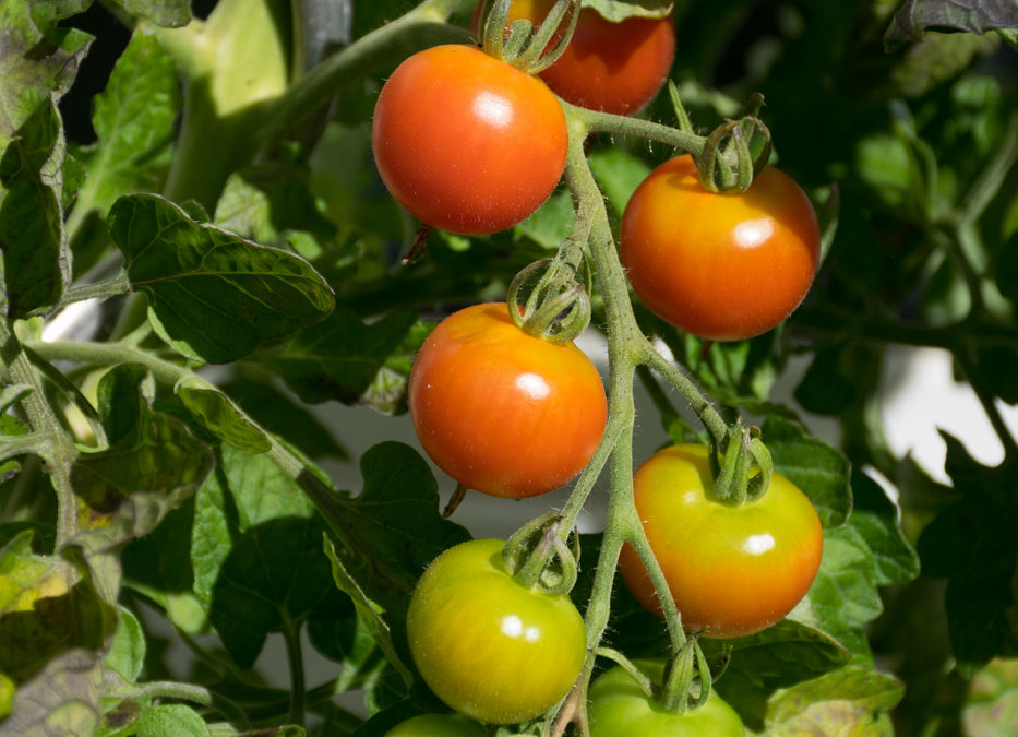 """Eigene Tomaten, """"Jud Süß"""" und Rassismus"""